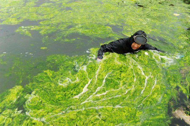 Чистить пруд от водорослей