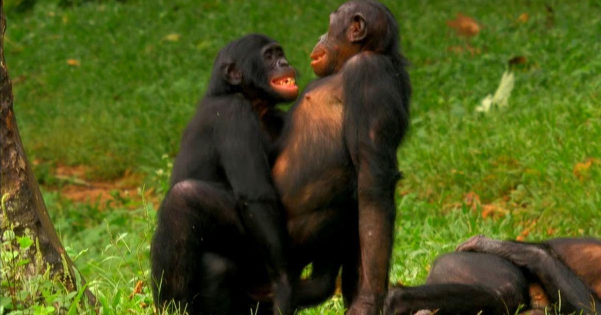 Секс тварин видео