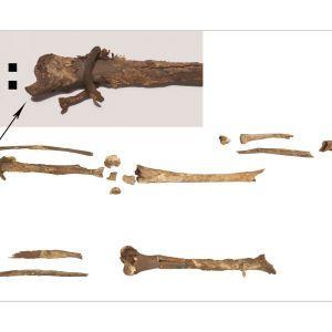 В Дании нашли кости викингов, потерянные более сотни лет назад: фото