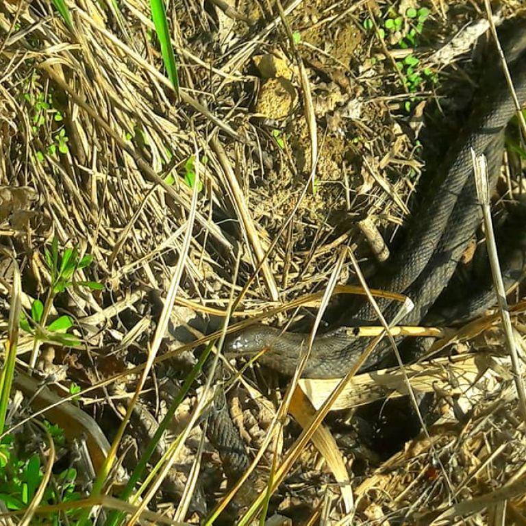 Змії під ліжком, в кущах і горах: як уберегтися від укусу плазуна