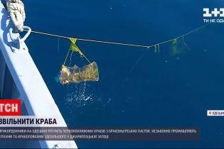 Новини України: в Одеській області прикордонники рятують червонокнижних крабів від браконьєрів