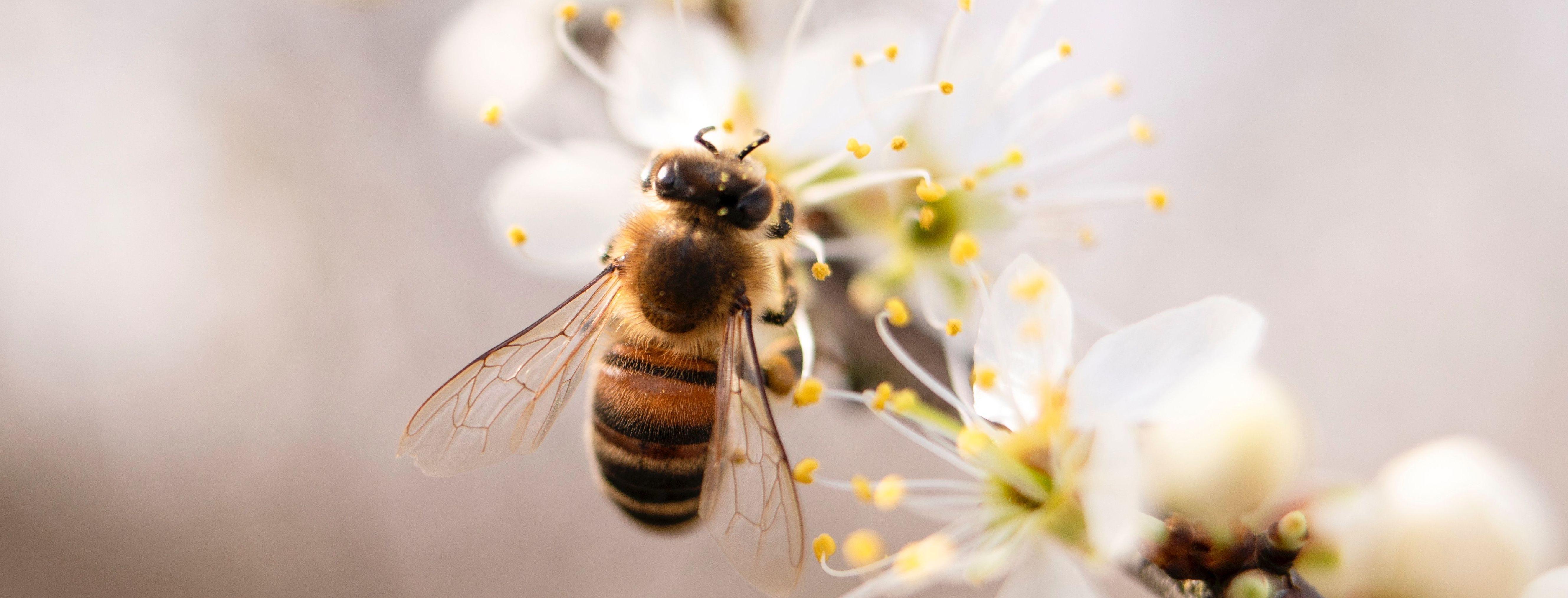 Пасечники жалуются на рекордный мор пчел, а отравленный мед попадает на полки супермаркетов