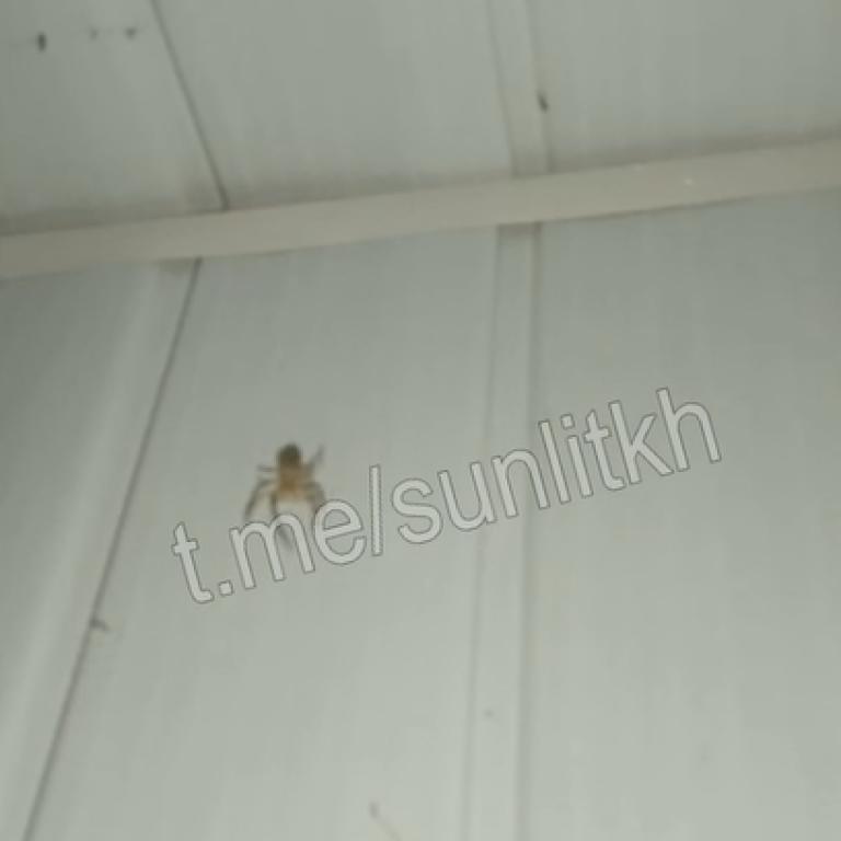 """""""Не хватает только метеорита"""": в Кирилловке на смену нашествию медуз пришли пауки (видео)"""