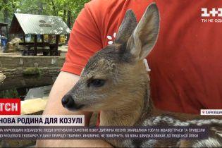 Новини України: небайдужі люди привезли до харківського екопарку знайдене маля козулі