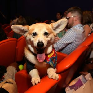 """Філософія """"pets friendly"""" у сервісі і дружні до тварин офіси: кінологи прогнозують тренди на 2021 рік"""