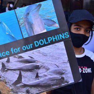 40 дельфінів загинуло після витіку нафти біля Маврикію: люди протестують і вимагають розслідування