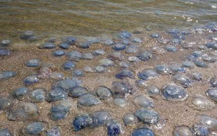 Кишит: в Сети показали, как выглядит нашествие медуз в Примпосаде с высоты птичьего полета (видео)