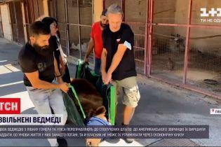 Новини світу: американський притулок прихистить двох ліванських ведмедів
