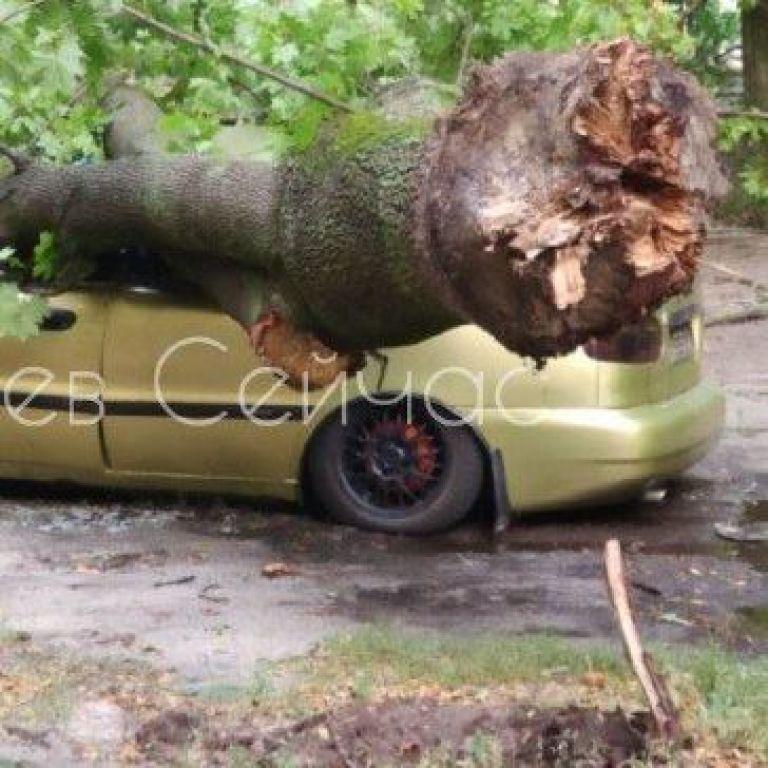 В Киеве огромное дерево упало на автомобиль
