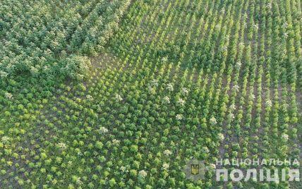 "В Херсонской области ""фермер"" вырастил конопли на миллион гривен"