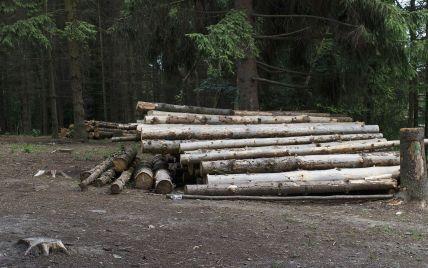 Лес в смартфоне. Почему и как онлайн контролировать лесное хозяйство