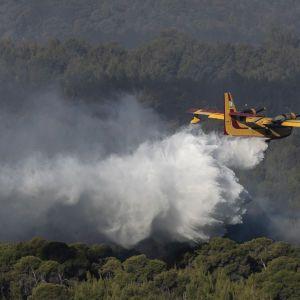 Американская Аризона страдает от масштабных лесных пожаров