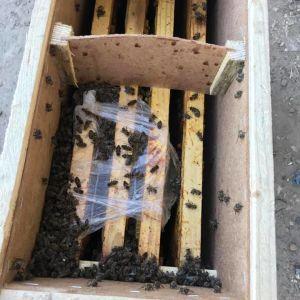 """Это произошло впервые: в """"Укрпочте"""" отреагировали на гибель во время транспортировки 8 миллионов пчел"""