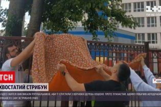 Новини України: в Одесі кіт злякався рятувальників і зістрибнув з верхівки дерева