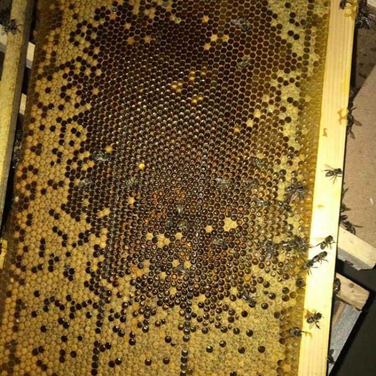 """Ни живые, ни мертвые: какая судьба постигла 8 миллионов пчел и как """"Укрпочта"""" оправдывается"""