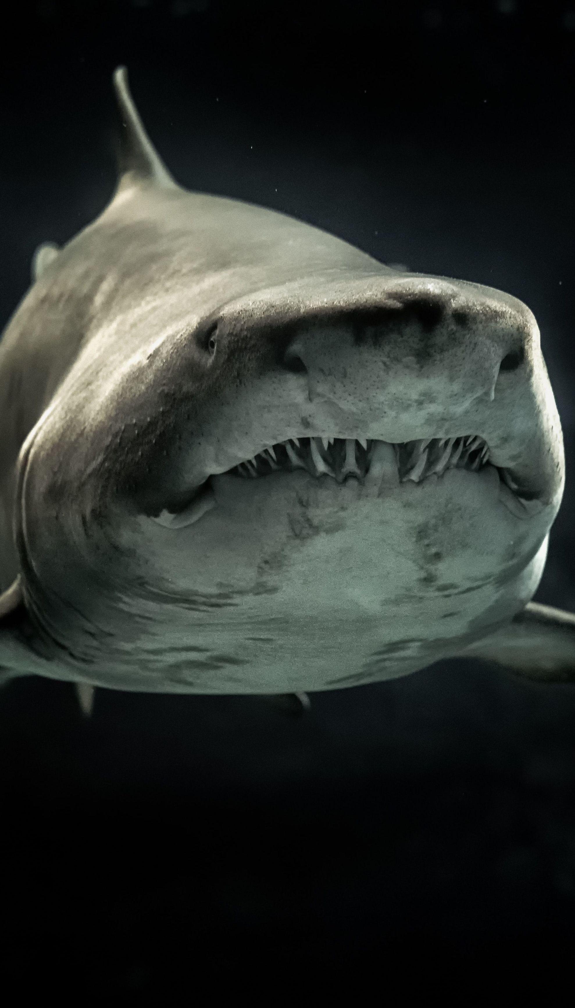У Новій Зеландії акула пошматувала молоду дівчину