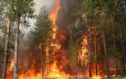 В Закарпатской области объявлен самый высокий уровень пожарной опасности