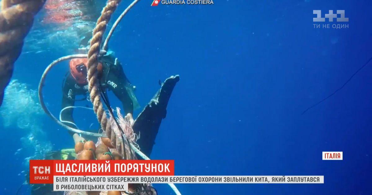 Спасение кита: итальянские спасатели освободили млекопитающего из рыболовецких сетей