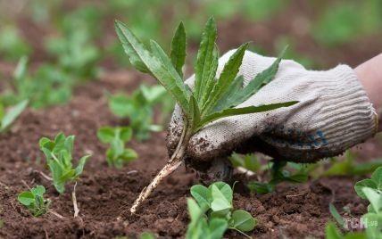 Как бороться с сорняками: полезные советы от специалиста