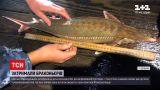 Новости Украины: морские пограничники спасли от браконьеров почти 20 краснокнижных рыб