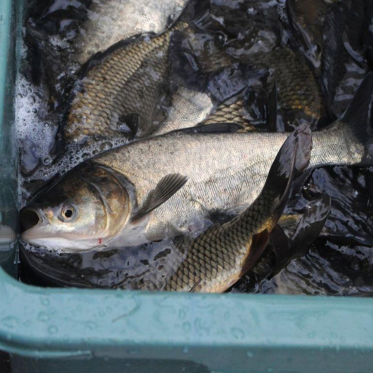 Рибна мафія захопила держорган: завдяки ТСН.Тижню розпочали кримінальні провадження