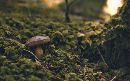 Пішли по гриби та заблукали: в Івано-Франківській області знайшли тіла двох чоловіків