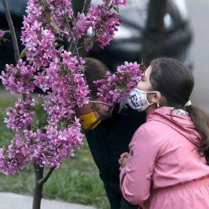 Топ-3 місця в Україні, де можна потішитися весняним цвітінням та пофотографуватися: деталі