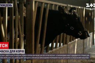 Новости недели: британские изобретатели сделали маску для коров