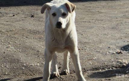 Закололи вилами и выбросили еще живую на помойку: под Сумами жестоко расправились с собакой
