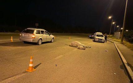 На Хортиці кінь вибіг на дорогу і потрапив під колеса автівки: тварина загинула від удару