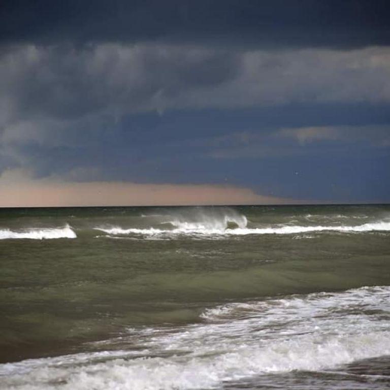"""В Одессе """"зацвело"""" море: что нашли в воде"""