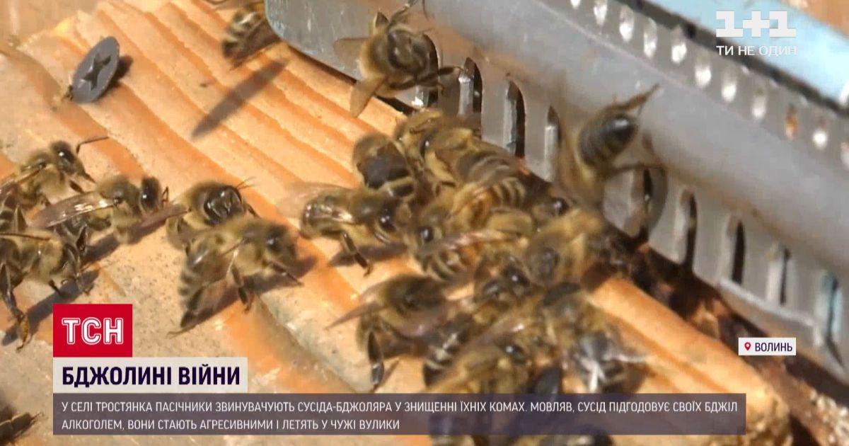 """В селе на Волыни между соседями происходят """"пчелиные войны"""""""