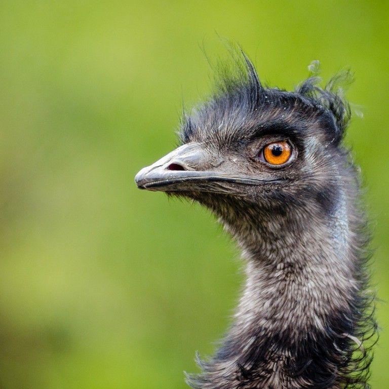 """Спецпроєкт """"Секрет ферми"""": як почати розводити страусів і у скільки обійдеться ведення небезпечного бізнесу"""