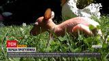Новини України: у бердянському зверинці врятували осиротіле кенгуренятко