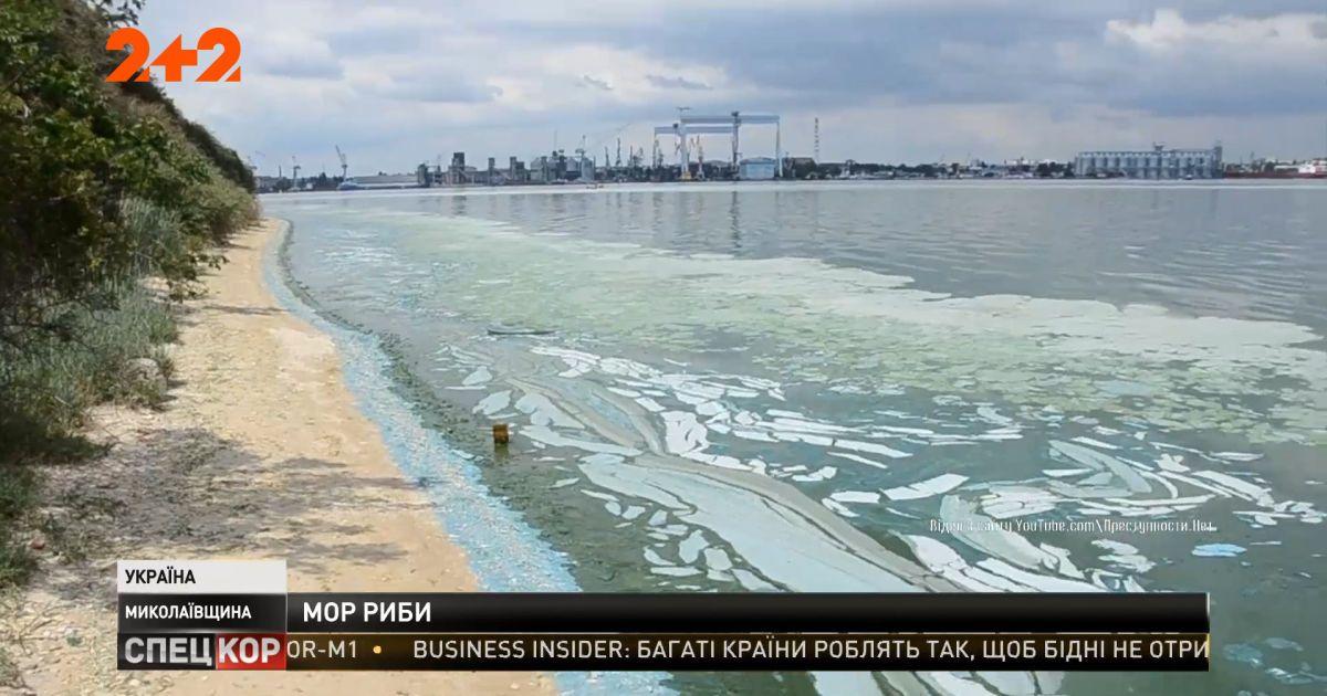 В Николаевской области Бугский лиман превращается в зловонное болото