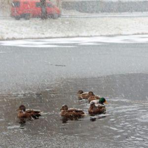 Дощ, а місцями мокрий сніг: прогноз погоди в Україні на суботу, 26 грудня
