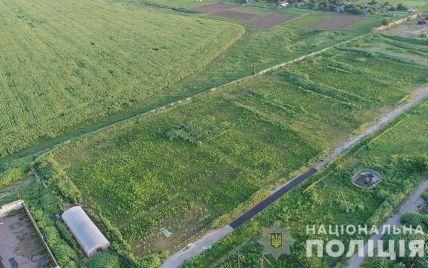 В Херсонской области обнаружили рекордный посев конопли: масштабы поражают (видео)
