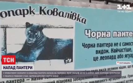 Медики рассказали о состоянии мужчины, на которого напала пантера в экопарке под Полтавой