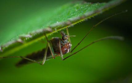 Крим потерпає від нашестя комарів: що сталося