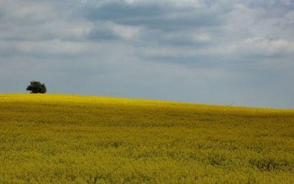 Украинцы могут потерять свои земельные участки: объяснение Минюста