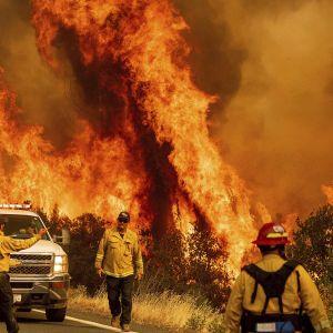 Починаються від ударів блискавок: що відомо про пожежі в Каліфорнії, які можуть стати наймасштабнішими в історії