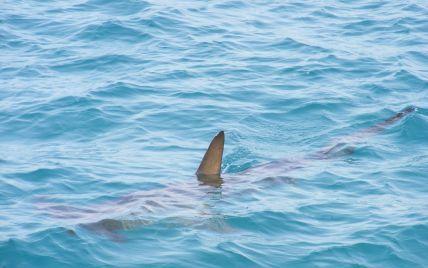 Біля Маямі величезна акула напала на хлопця: підліток втратив майже 70% крові