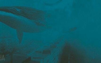 """""""Сині кити"""": у Нацполіції розповіли, яка категорія підлітків є найбільш вразливою для """"груп смерті"""""""