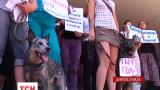 В Днепропетровске разгорелся скандал между зоозащитниками и коммунальщиками