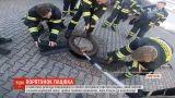 У Німеччині бригада пожежників та зоолог врятували товстого щура