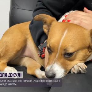 В Ровно слепая на один глаз собака неделю жила с телом хозяина в квартире: кто и как спас четырехлапую