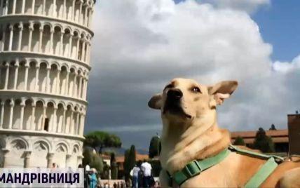Тварина-мандрівниця: собака з Києва об'їздила 30 країн та 116 міст