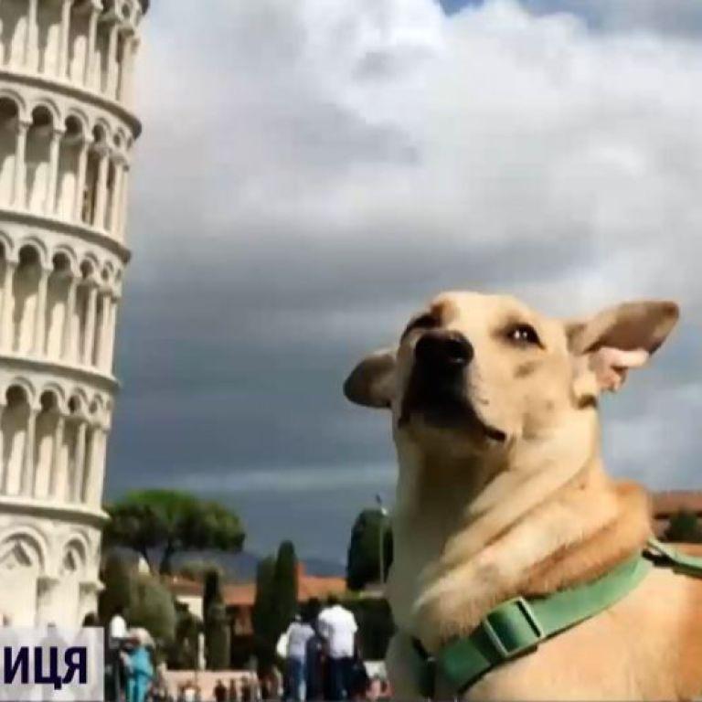 Животное-путешественник: собака из Киева объездила 30 стран и 116 городов