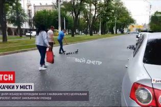 Новости Украины: в Днепре неравнодушные переводили утку с малышами через центральный проспект