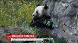З вашингтонського зоопарку панду повертають до Китаю